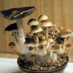 A gombák menthetik meg a világot