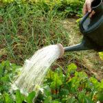 A legősibb környezetbarát gyomirtó: A forró víz