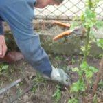Természetes növényvédő szerek